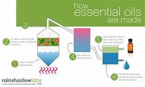 Foot Diagram Essential Oils