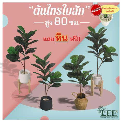 ((ต้นไม้ยอดนิยม!)) ต้นไทรใบสักปลอม เสมือนจริง 80 ซม. พร้อม ...