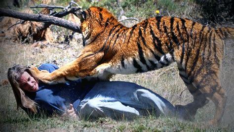 insane animal attacks  humans caught  film
