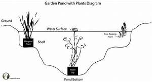 Pond Diagram