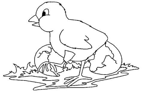 Kleurplaat Papegaai Peuters by Kinderpleinen Vogels Kleurplaten