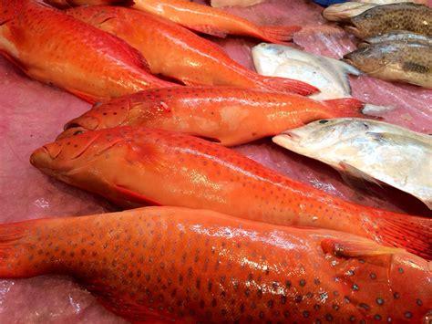 Komisija ierosina 2017. gada zvejas iespējas Atlantijas ...