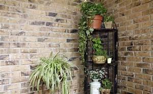Zimmerpflanzen Für Dunkle Räume : ber ideen zu pflegeleichte zimmerpflanzen auf ~ Michelbontemps.com Haus und Dekorationen