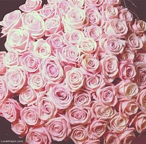 pretty pink roses pictures photos and images for
