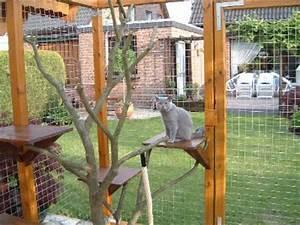 katzengehege bauen dscf0025 jpg With katzennetz balkon mit brenas garden la palma