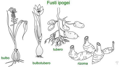 fusti delle piante