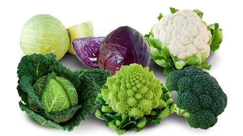 cuisiner une choucroute soyez chou remèdes plantes santé
