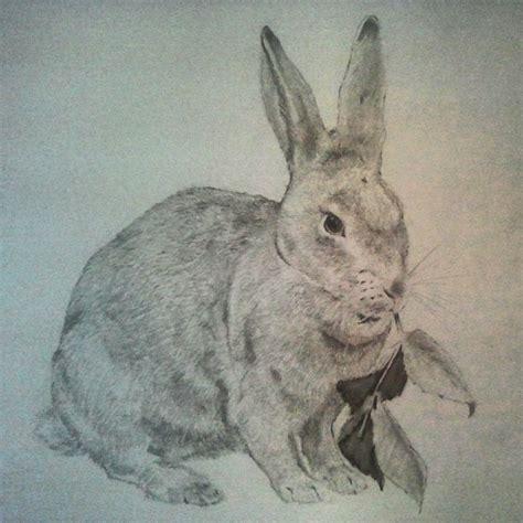 Rabbit Drawing Rabbit Sketch In Pencil