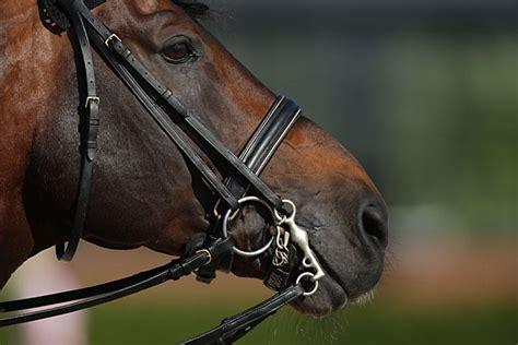 pferdekopf kandare trense zuegel zaeumung