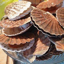 cuisiner le corail des coquilles jacques cuisiner les coquilles jacques 28 images cuisine