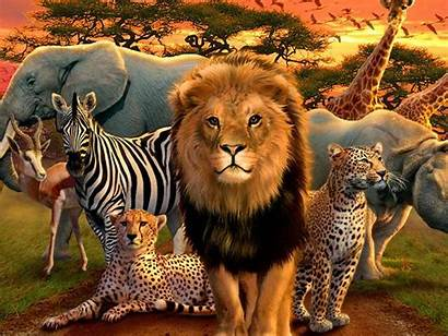 Animal African Wallpapers Animals Whats Five Jungle
