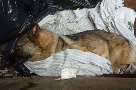 brian whitlock captain  dogs killer sentenced   days