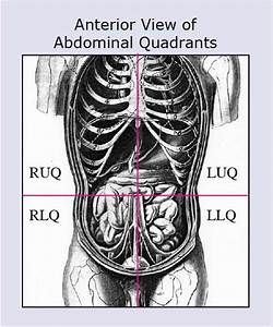 Anatomical Terms  U0026 Meaning  Anatomy Regions  Planes  Areas  Directions