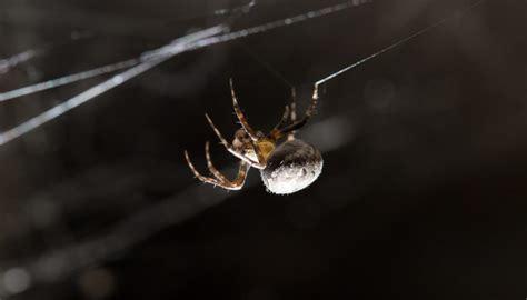 spinnen in der wohnung bekämpfen was hilft gegen spinnen im haus mittel gegen spinnen haus spinnen tiere arten giftige bek