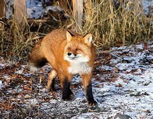 Alaska Wild Animals