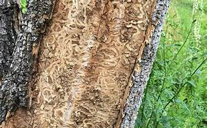 The Emerald Ash Borer strikes again - two more states