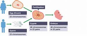 Igcse Biology 2017  3 2  Understand That Fertilisation
