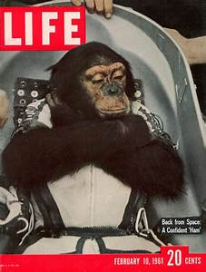 The Monkey in t... Space Chimp Quotes