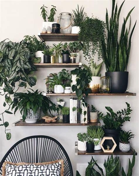sunlight indoor plants   home decor