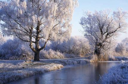 winter scene  bare trees   canopy  snow lit