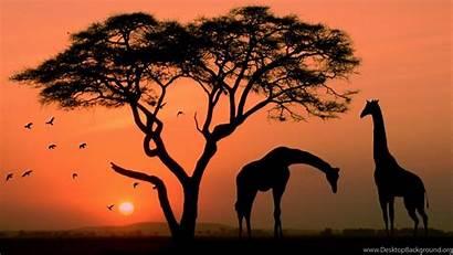 Africa Giraffe 4k Giraffes Wallpapers Ultra Landscape