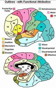 Brain Jack Image  Brain Function Map