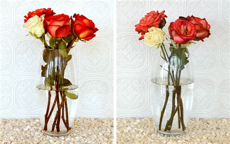 How To Preserve Flowers In A Vase by How To Keep Roses Alive Womans Vibe