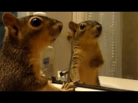 animals react   reflections funny animals