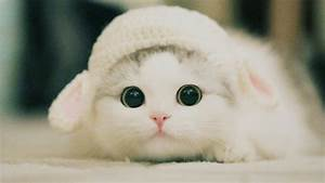 Cute Kittens Will Melt Your Heart - Kittens That Will Make ...  Cutest