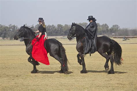 Zorro And His Lady On Their Friesian Horses Photograph By