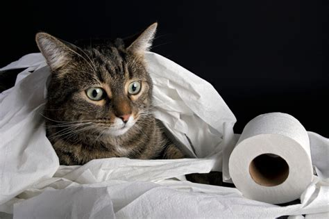 scoop  cat poop