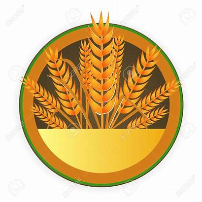 Harvest Clipart Grain Harvesting Cereal Wheat Clipartmag
