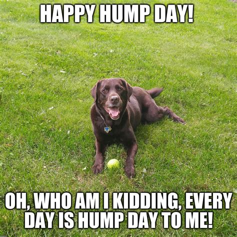 Happy Hump Day Meme - funny dog imgflip
