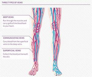 Overview And Symptoms Of Varicose Veins  U2022 The Vein Centre