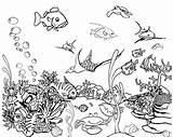 Fish Coloring Aquarium Tropical Pages Tank Drawing Saltwater Printable Fishing Tanks Georgia Fishtank Adult Netart Getdrawings Drawings Realistic Getcolorings Designlooter sketch template