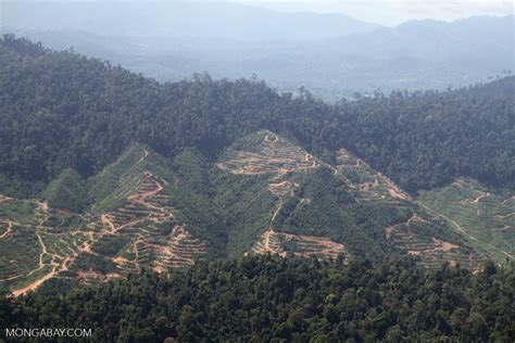 American retirement funds contribute to deforestation and ...