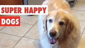 Super funny videos - Super Happy Dogs | Funny Dog Video ...