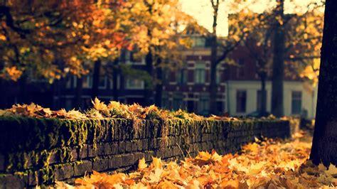 autumn   city autumn photo  fanpop