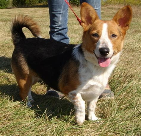 beagle  doggie bloggie