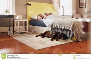 Bett Auf Boden : junge paare die bequem auf bett mit hund auf boden schlafen stockfoto bild von mann leben ~ Markanthonyermac.com Haus und Dekorationen