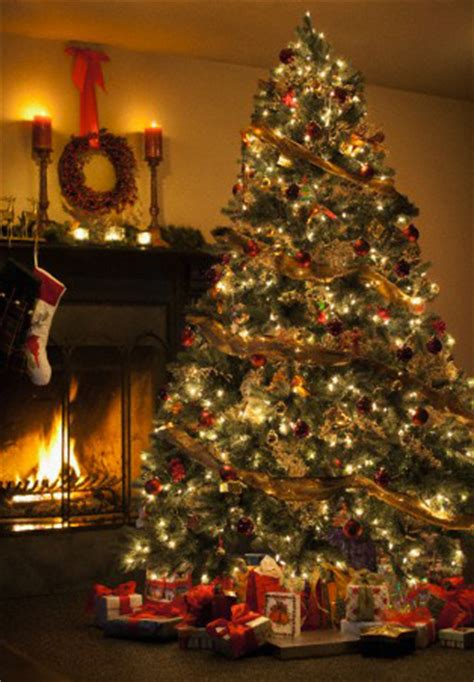 do real christmas trees have bugs alarm center security don t let your tree go up in flames