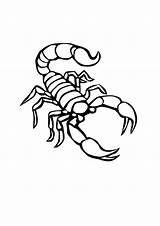 Scorpion Coloring Outline Printable Drawing Animal Desert Scorpian Tattoo Tattoos Drawings Sheets Stencil Worksheet Moon Patterns sketch template