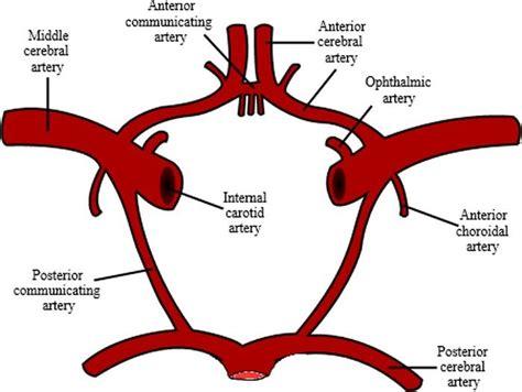 aneurisma carotide interna best 25 carotid artery ideas on