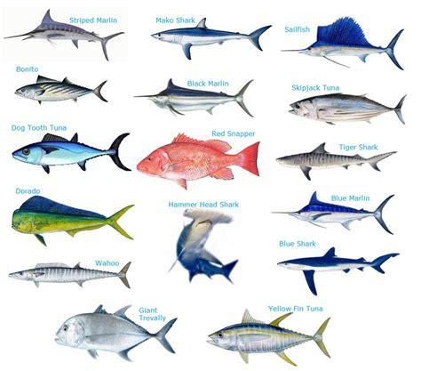 abrotea fish google search fish animals