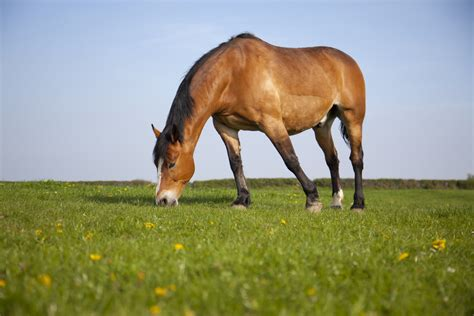 herbivores eat horses plants horse means which they facts