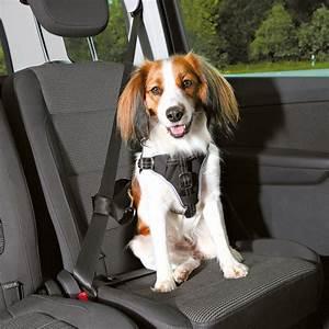 Hundegurt Fürs Auto : trixie auto sicherheitsgeschirr hund dog protect 12855 von ~ Kayakingforconservation.com Haus und Dekorationen