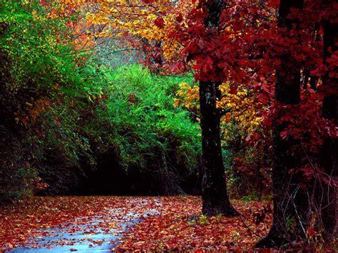 Autumn Forest and Landscape Color | Wallpup.com