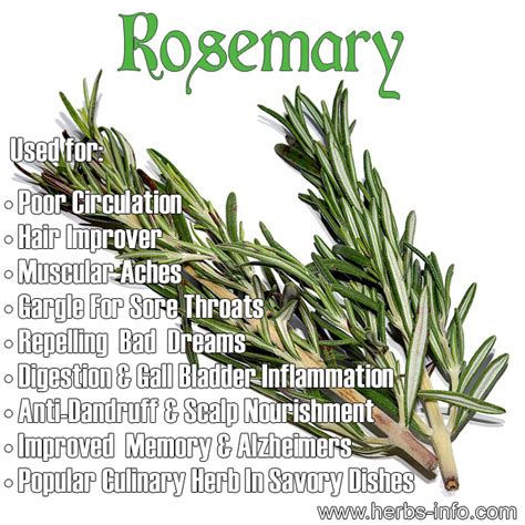 Rosemary Herb Diagram by Rosemary On Emaze