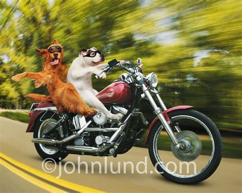 7 Best Images About Humor Motorcycle Pics On Pinterest