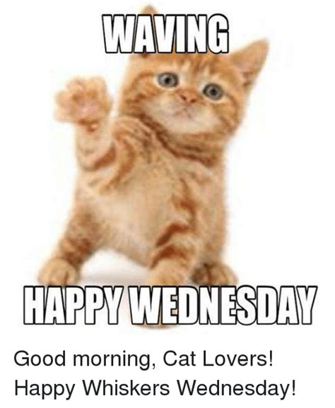Cat Lover Meme Waving Happy Wednesday Morning Cat Happy